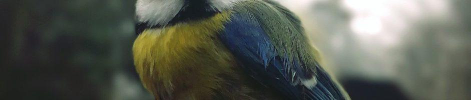 Ptasie walentynki – oczami pana Macieja